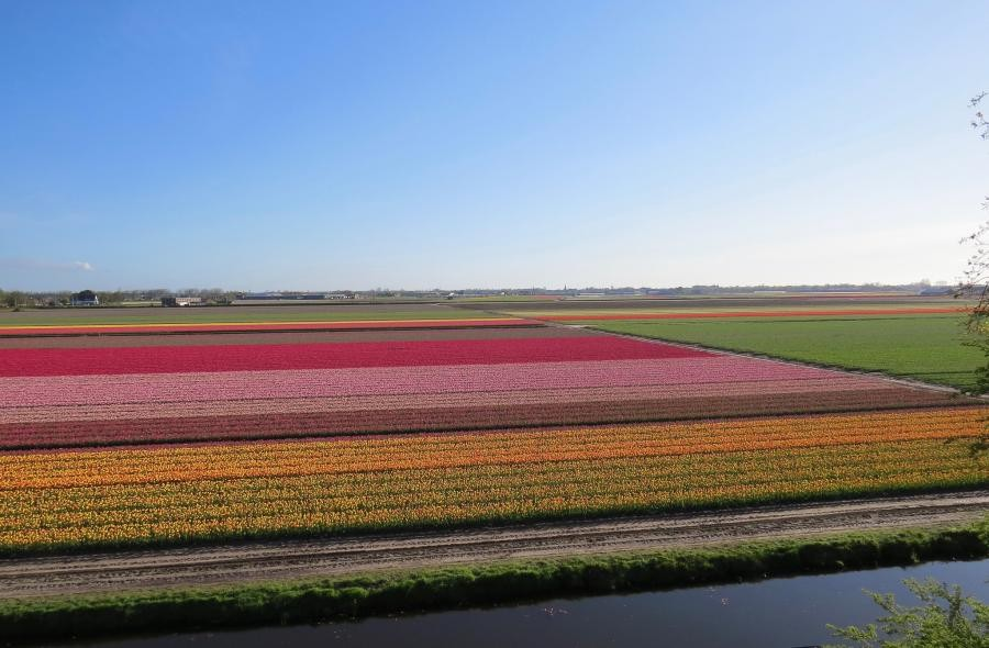 PA/F1GFK Flowerfield, Lisse, Netherlands.