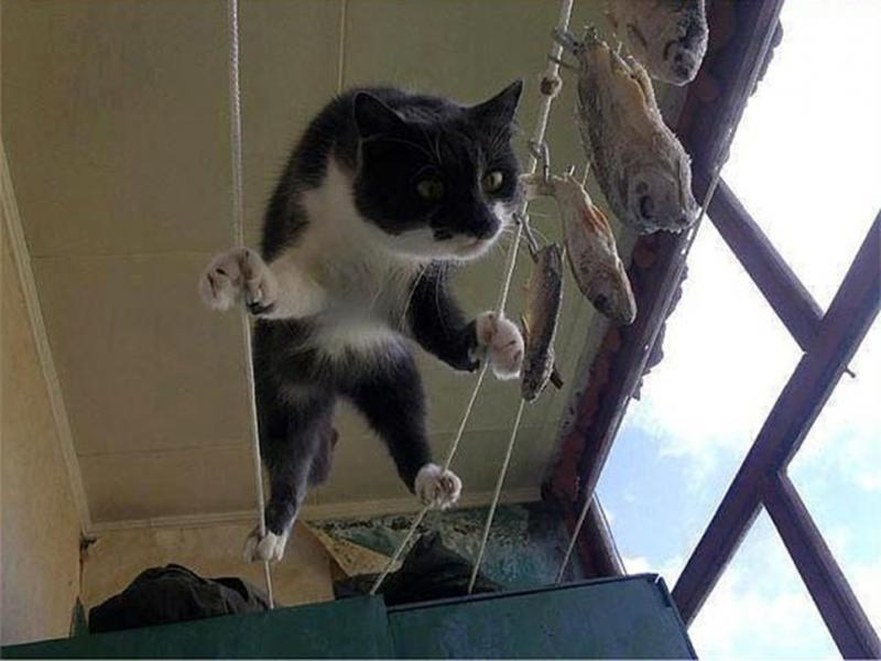 Fish Climber