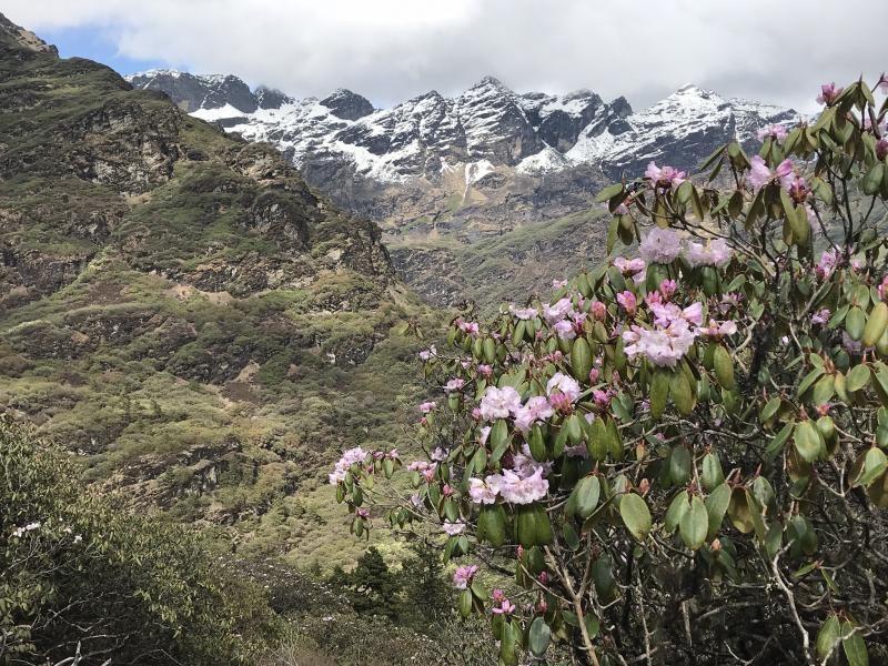 A52C Bhutan