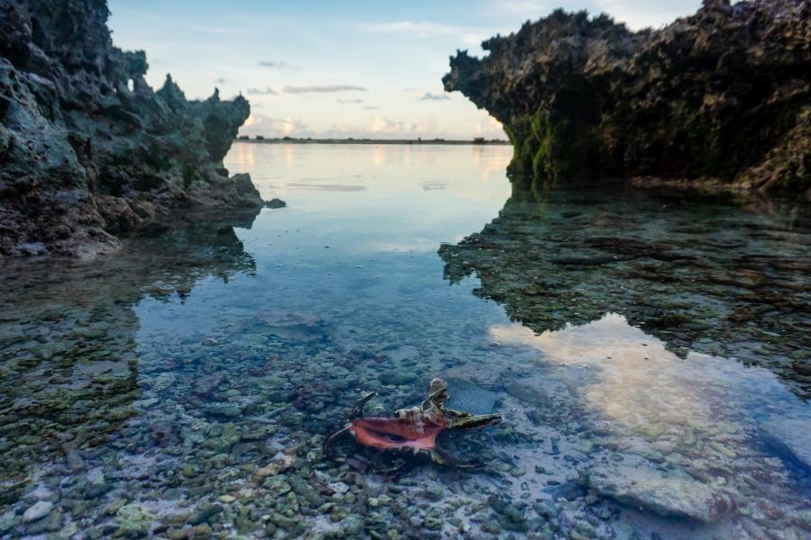 W3FM/KH2 Harpago chiragra Shell at Serena Beach, Guam Island.