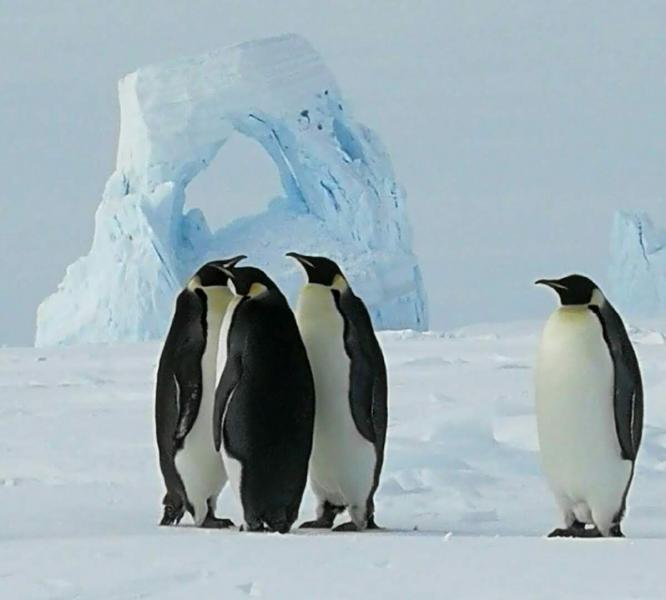 IA0/IZ1KHY KC4/IZ1KHY ZL5/IZ1KHY HL8/IZ1KHY KC4/IZ1KHY/P Antarctica DX News