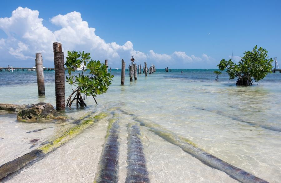 V31FA Caye Caulker Island, Belize