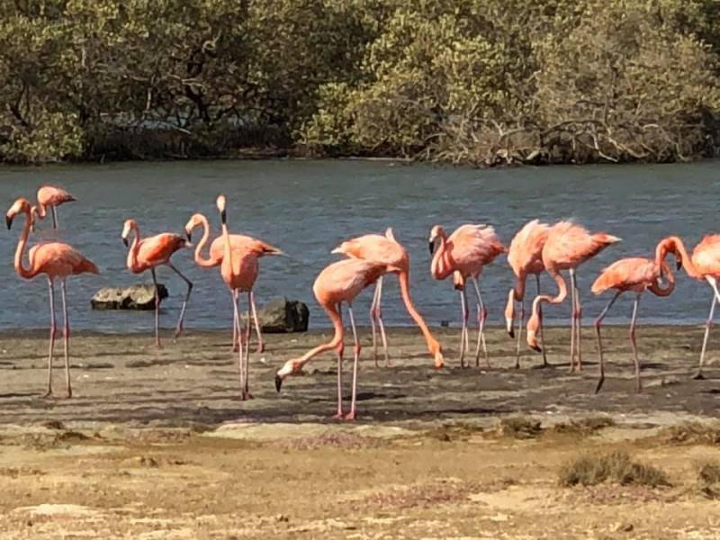 PJ4/IZ4DPV Rincon, Bonaire Island. Flamingos Image 1