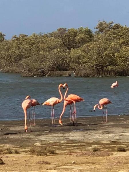 PJ4/IZ4DPV Rincon, Bonaire Island. Flamingos Image 3