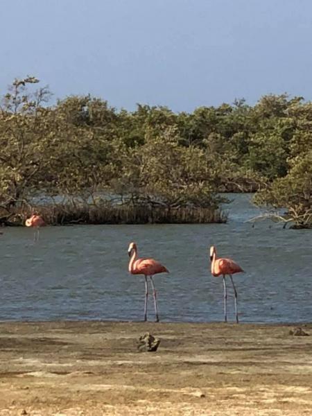 PJ4/IZ4DPV Rincon, Bonaire Island. Flamingos Image 4
