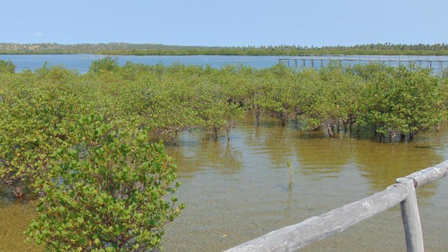 C91AHV Barra Beach Bay, Mozambique
