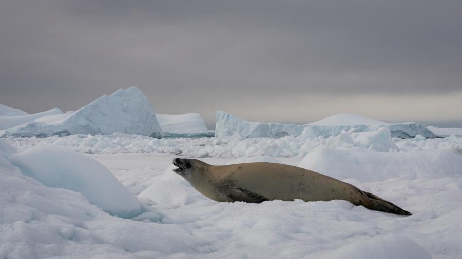VP8CTR Antarctica