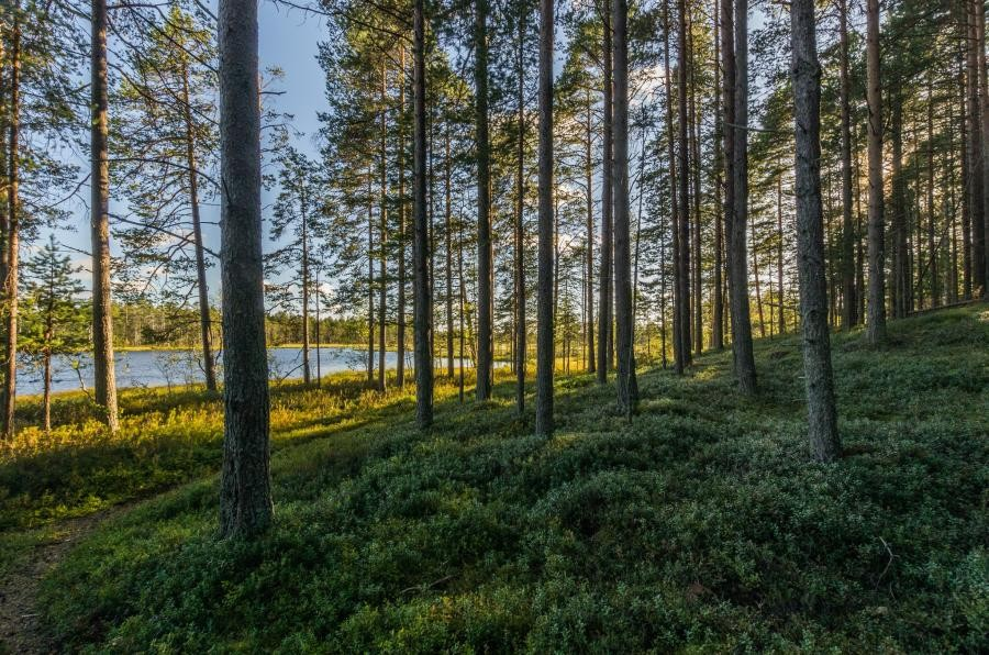 OH8T Hailuoto Island, Finland