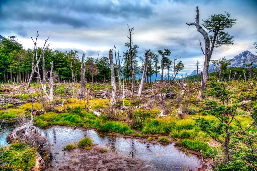 LU/DL2OE Tierra del Fuego Archipelago, Argentina