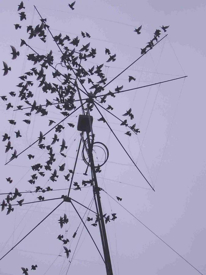 Bird Quad Antenna