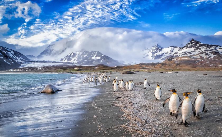 VP8IMD Falkland Islands