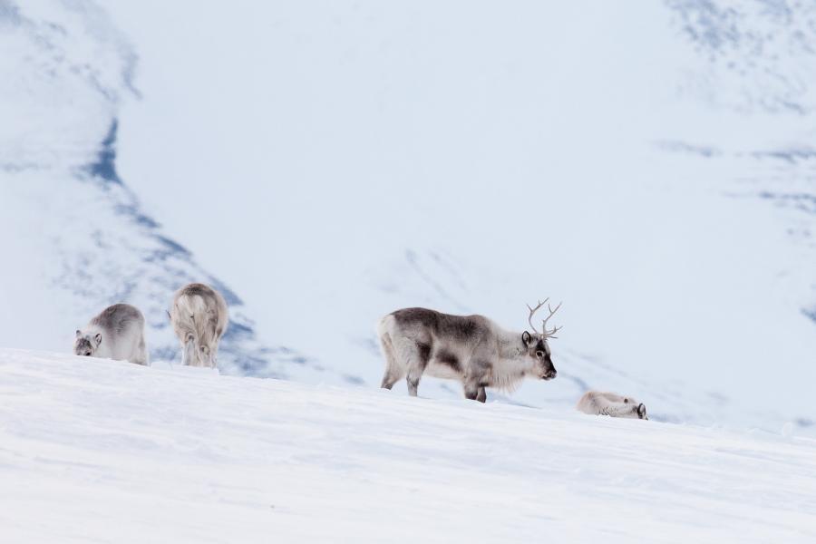 JW/MM0NDX Svalbard Archipelago