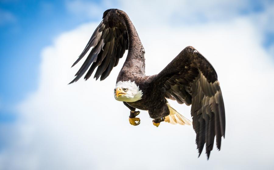 NC6K/KL7 Bald Eagle, Alaska