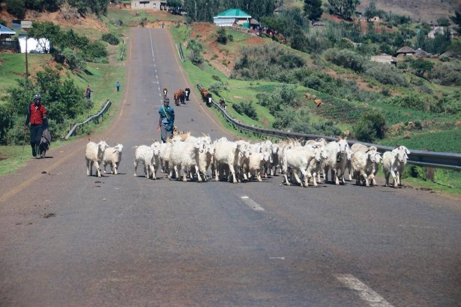 7P8/ZS5GMW Lesotho