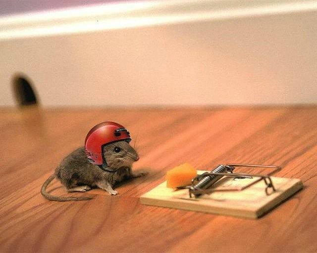 Protected Mouse