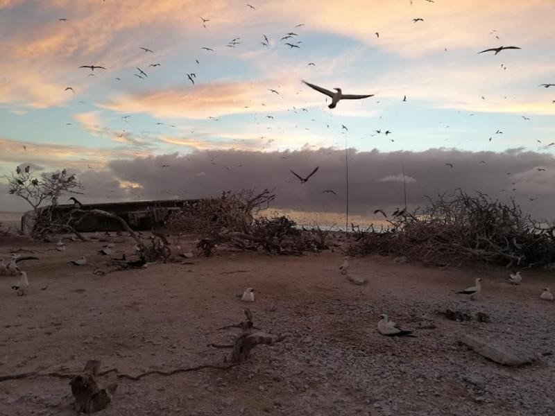 Conway Reef 3D2CR DX Pedition Image 11