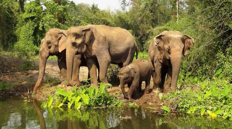 E2HQ Thailand Elephant, Kanchanaburi
