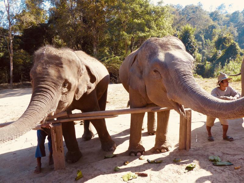 HS0ZOF Elephants, Chiang Mai, Thailand