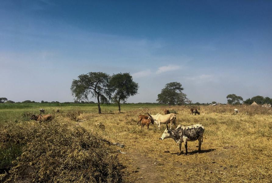 Z81C South Sudan