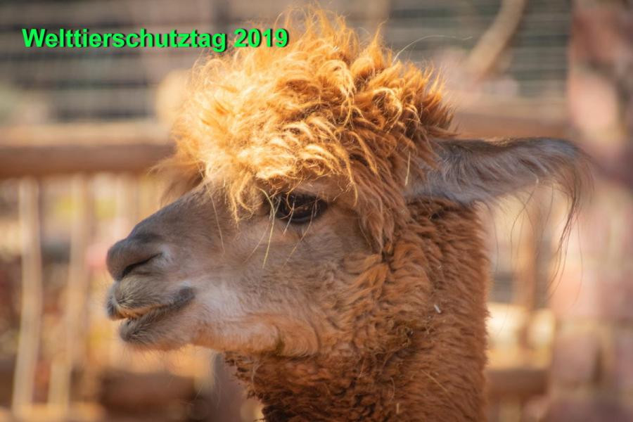 OE190APD OE192APD OE193APD OE196APD Austria World Animal Protection Day