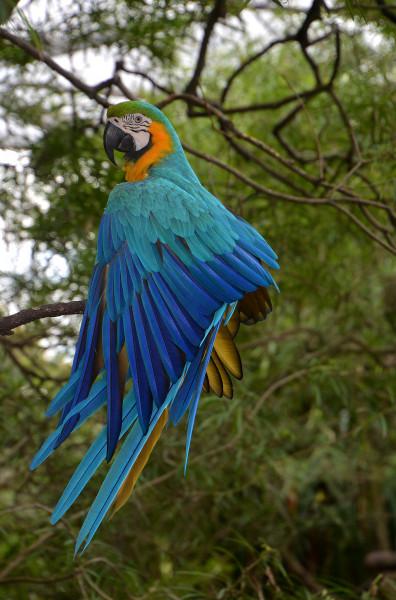 ZP6/PU5SVE Ara, Paraguay