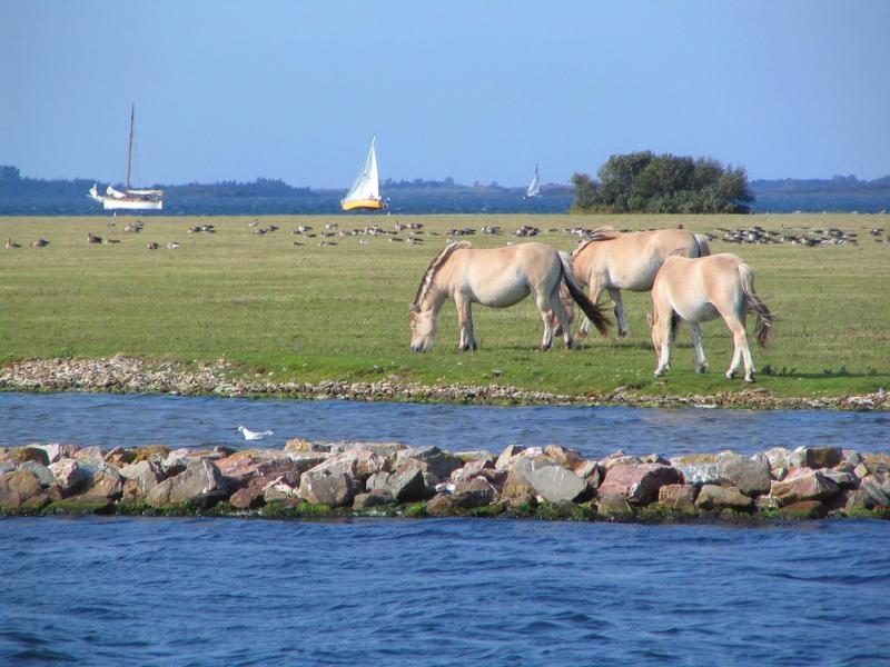 PA5TT Schouwen Duiveland Island