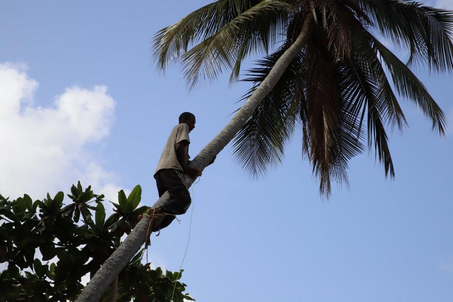 5H4WZ Pemba Island 8 February 2020 Image 2