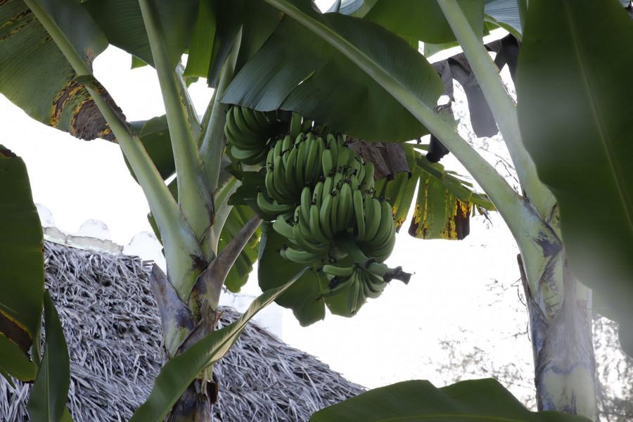 5H4WZ Pemba Island 9 February 2020 Image 2