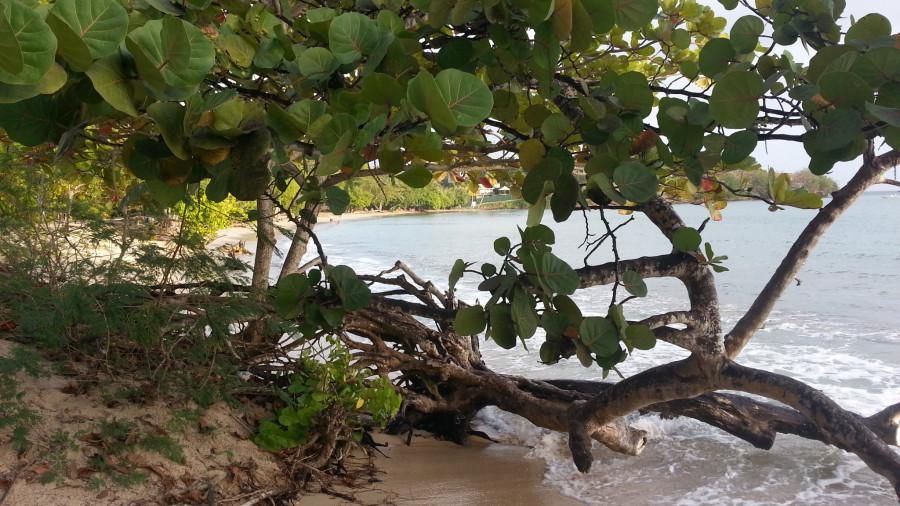 FM/VE3DZ Ducos, Martinique Island 11 February 2020 Image 3