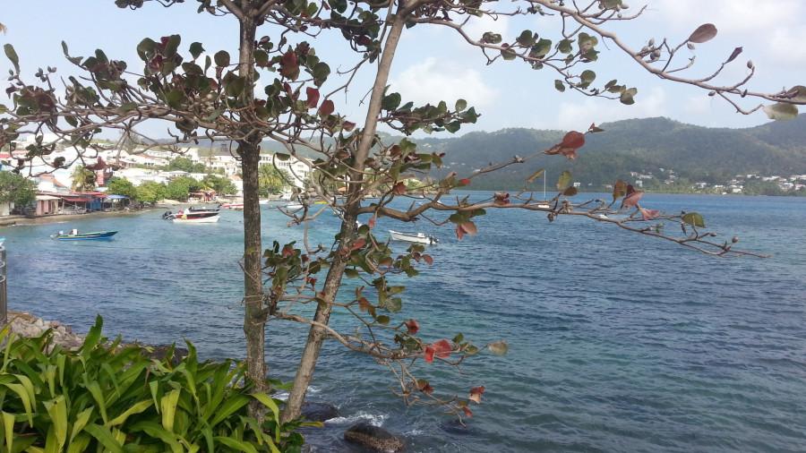 FM/VE3DZ Ducos, Martinique Island 11 February 2020 Image 9