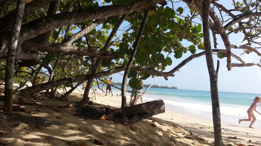 FM/VE3DZ Grande Anse, Martinique 12 February 2020 Image 4