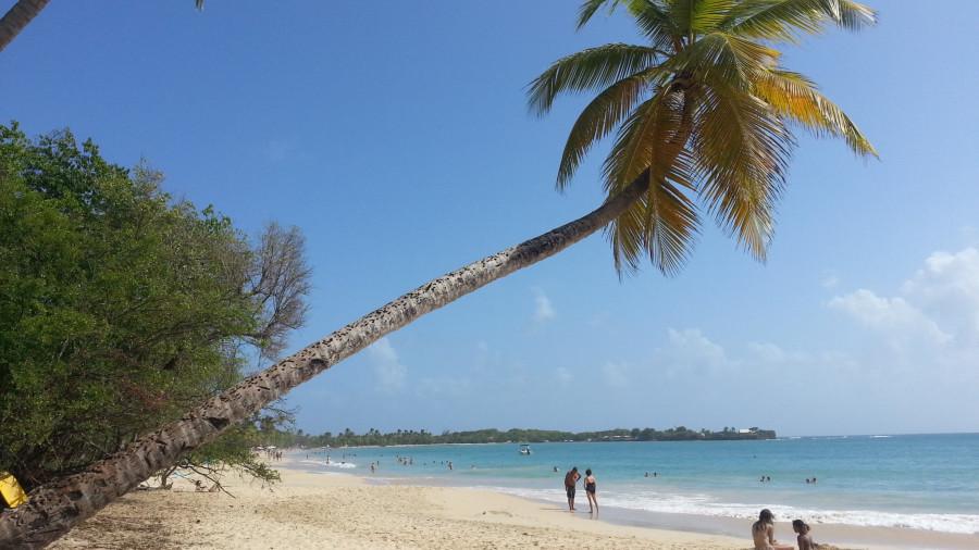 FM/VE3DZ Grande Ande des Salines, Martinique 12 February 2020 Image 6