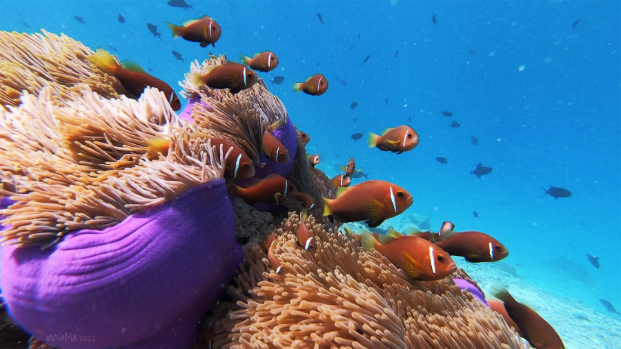 8Q7AR Maldive Islands