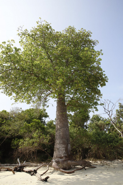 5H4WZ Masali Island Image 3