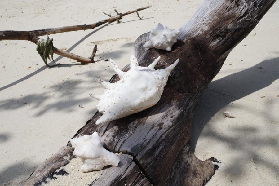 5H4WZ Masali Island Image 15