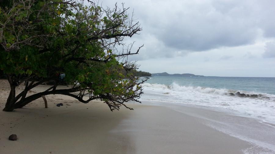 FM/VE3DZ Anse Mabouya, Martinique Island. Image 19