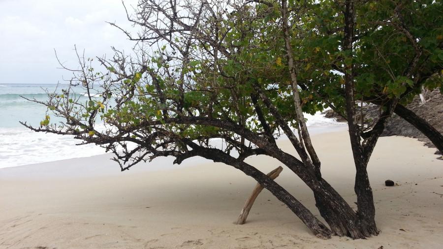 FM/VE3DZ Anse Mabouya, Martinique Island. Image 22