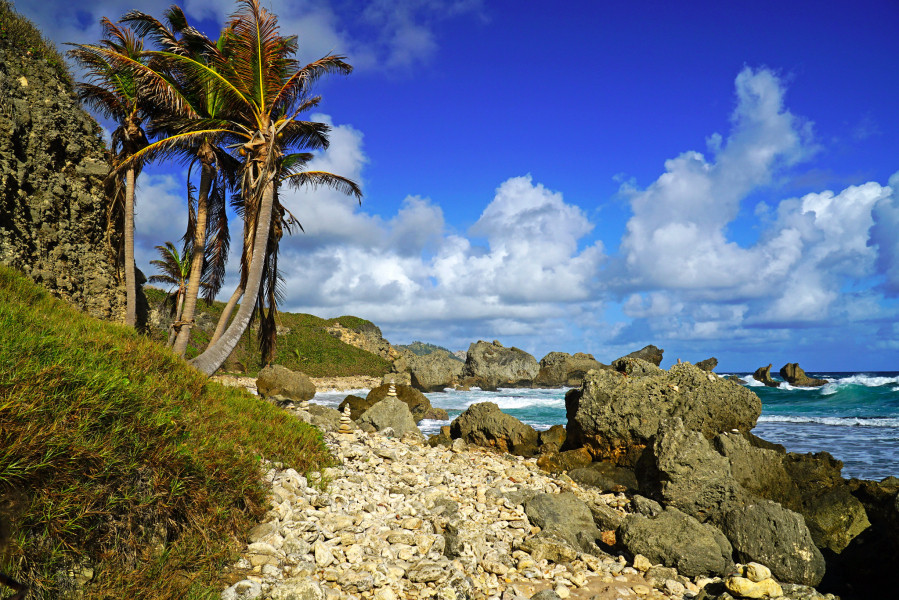 8P6GU Palm trees and rocks, Bathsheba, Barbados