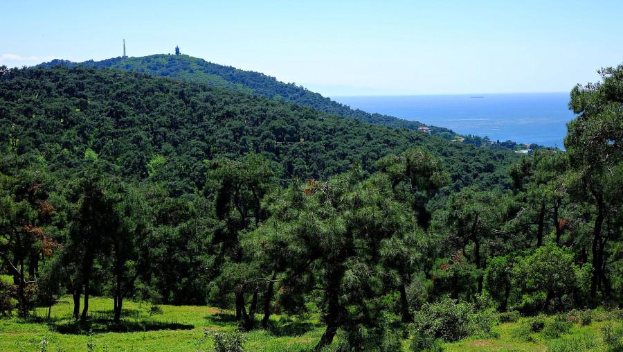 TA0TA Buyukada Island, Turkey