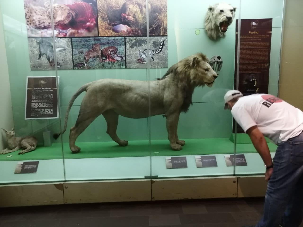7Q7RU National Museum Nairobi, Kenya Image 8