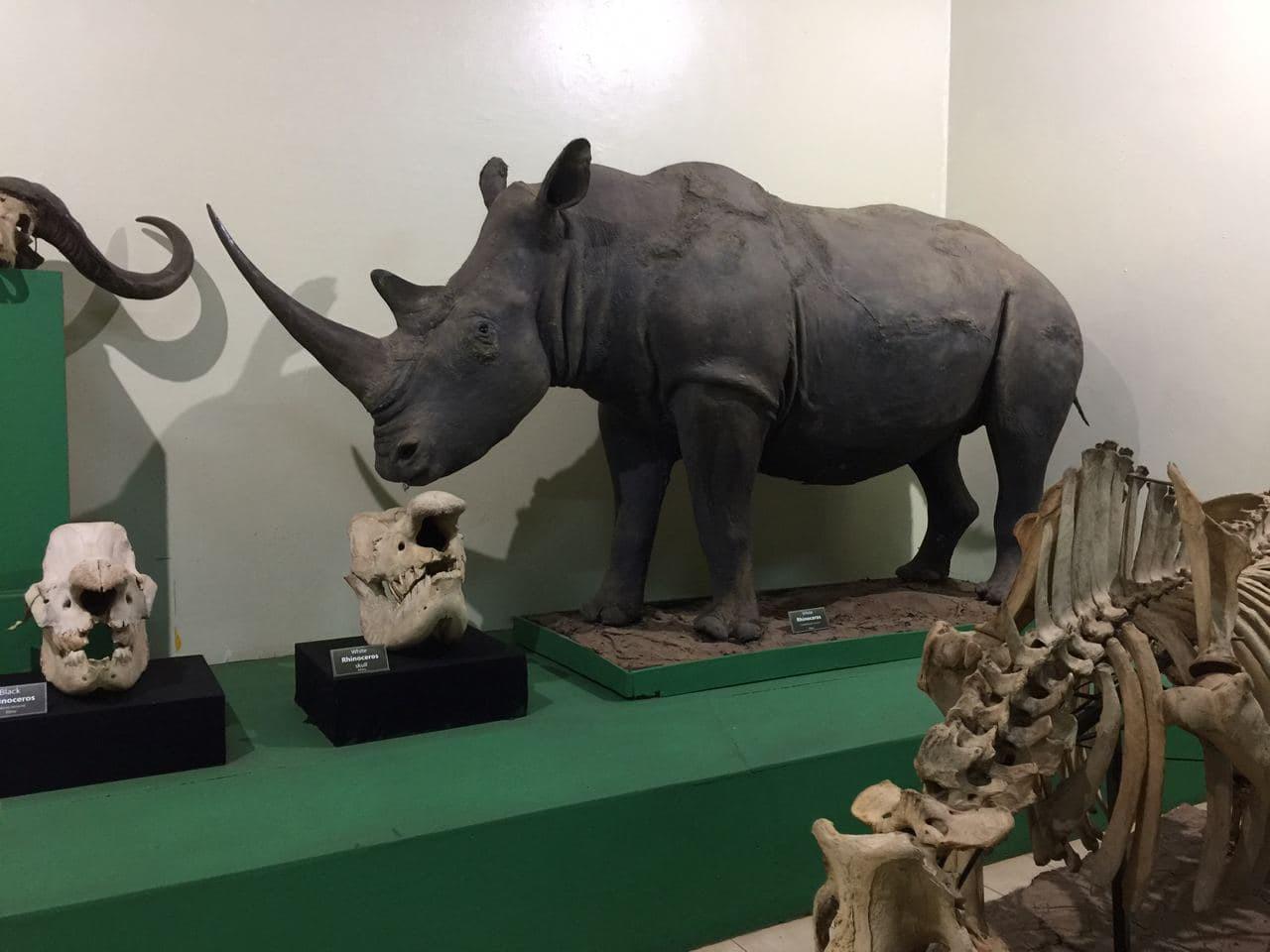 7Q7RU National Museum Nairobi, Kenya Image 17