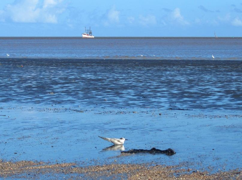8R1AK A shrimping trawler does its work while a sea bird rests in the shallows. Taken from the seawall off Kingston, Georgetown, Guyana