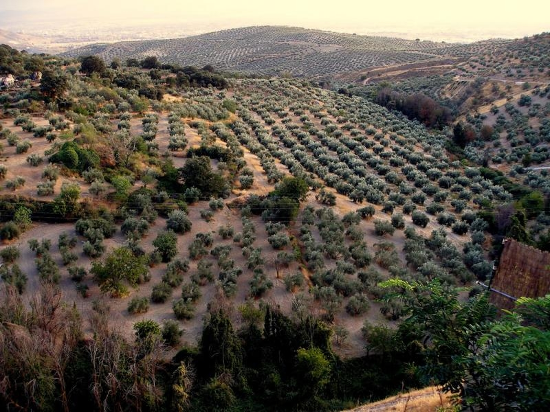 EA7/ON4BCV Olive Grove, Andalusia, Spain