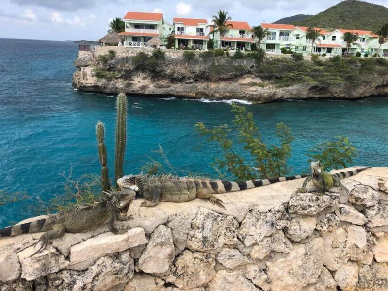 PJ2/KU1CW Curacao Island Iguanas