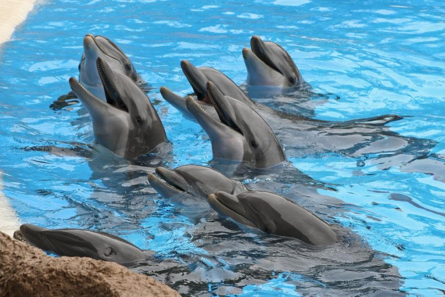 EA8/SP5WWY Dolphins, Loro Park, Canary Islands.