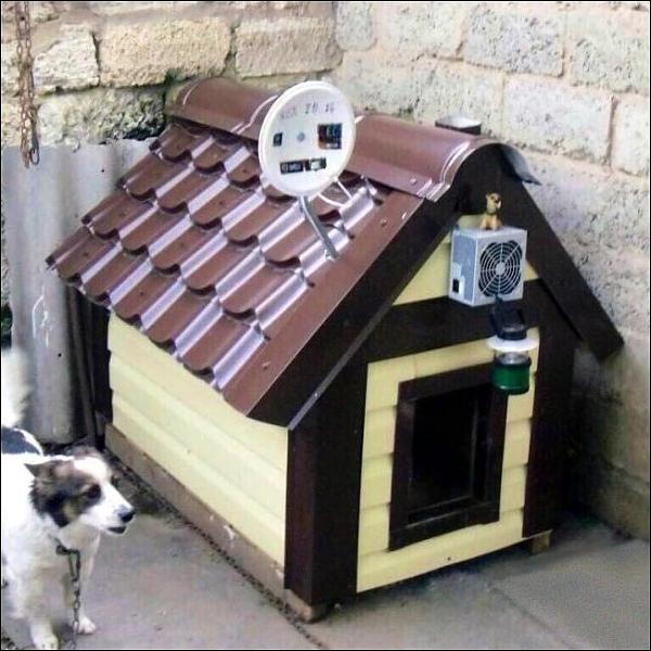 5 Star luxury dog kennel