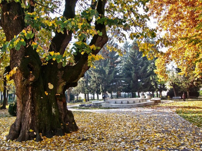 9A0BB Autumn in park, Petrinja, Croatia.