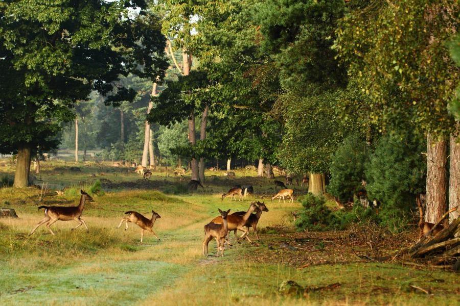 PA/ON5SWA/P Veluwezoom National Park