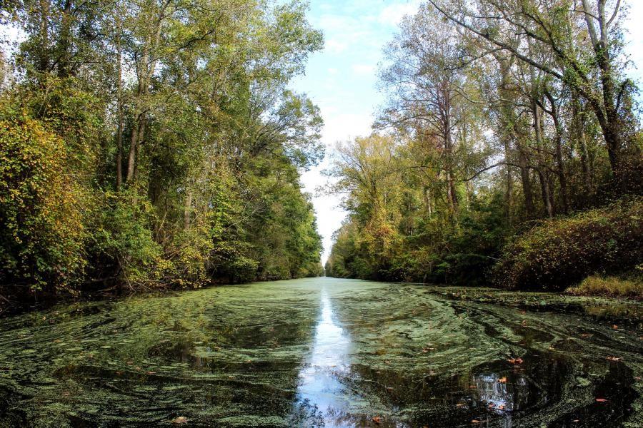 N4EX/P Dismal Swamp State Park.