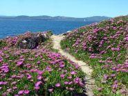 IS0/YL7A Sardinia Island